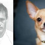 Puerto Rico: 7 años de cárcel a hombre que decapitó a perrito Chihuahua