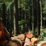 Italia: La FAO llama a optimizar el uso de madera como fuente de energía