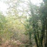 Los bosques son imprescindibles para sobrevivir