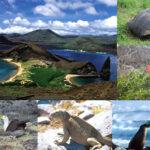 Ecuador conmemora 19 años de creación de la reserva marina Galápagos