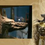 """""""Pequeño Anubis"""": En Egipto hallan mamífero carnívoro de 34 millones de años"""