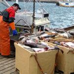 Exportación de bacalao se incrementa en 130.7%