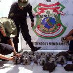 Rescatan 29 tortugas Galápagos en peligro de extinción