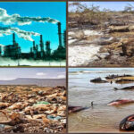 Enfermedades humanas también tienen impacto en medioambiente