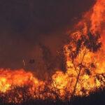 Guatemala: Alerta roja por incendio que avanza hacia México y Belice (VIDEO)