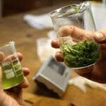 Uruguay: En julio comenzará la venta de marihuana en farmacias