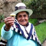 Más de 150 familias de Cusco inician comercialización de hongos comestibles