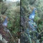 Colombia: Aeronave militar se estrella contracerro y deja 8 muertos