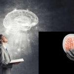 Aprender a leer de adulto provoca cambios profundos en estructuras del cerebro