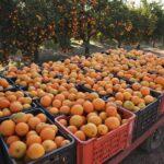 Portal de agricultores españoles se amplia para incluir a productores de Perú