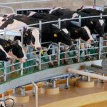 FAO pide a productores de leche ser sostenibles con el medioambiente