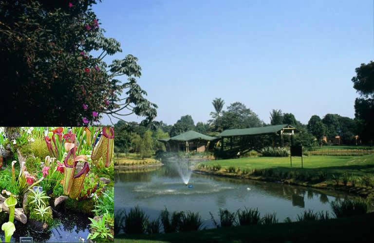 Colombia 500 plantas carn voras se expondr n en jard n for Informacion sobre el jardin botanico