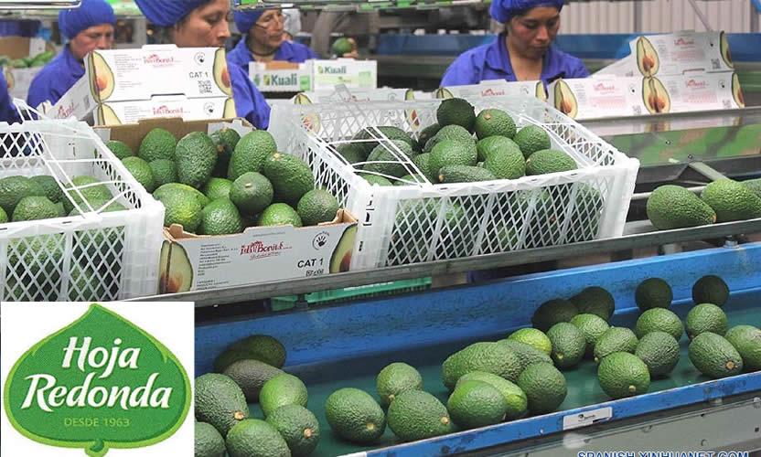 Citrícola San Miguel realizó oferta por una compañía frutícola peruana