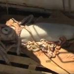 Irlanda: Capturan gigantesco calamar de más de 5 metros y medio (VIDEO)
