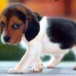 Científicos chinos crían primer perro del mundo clonado con células somáticas
