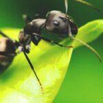 Algunas plantas pueden convertir a los insectos herbívoros en caníbales