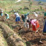 FAO y FIDA crean alianza para erradicar pobreza rural en América Latina