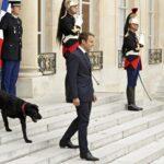 Francia: Presidente Macron adopta un perro y lo llama Nemo