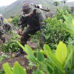 Perú despliega cerca de 10,000 militares en su mayor cuenca cocalera