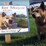 Un perro es candidato a alcalde en Canadá (Video)