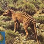 Australia: El cambio climático acabó con los tigres de Tasmania