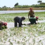 Sector agropecuario alcanzó crecimiento récord de 9% en julio