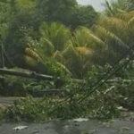 Isla Dominica: Huracán María derriba árboles y provoca olas gigantescas