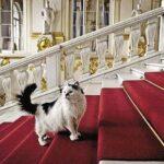 Hermitage aclara que sus gatos no murieron en incendio y están a salvo