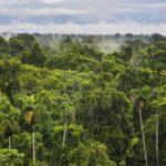 Brasil paraliza decreto que abría a la minería una reserva de la Amazonía