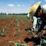 El desarrollo campesino es clave para acabar con el hambre en Latinoamérica