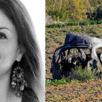 Malta: Con bomba en su auto matan a periodista que denunció paraísos fiscales