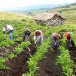 Minagri: Senasa será fortalecido para consolidar desarrollo agrario