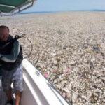 """Descubren gigantesco """"mar de basura"""" entre Honduras y Guatemala (VIDEO)"""