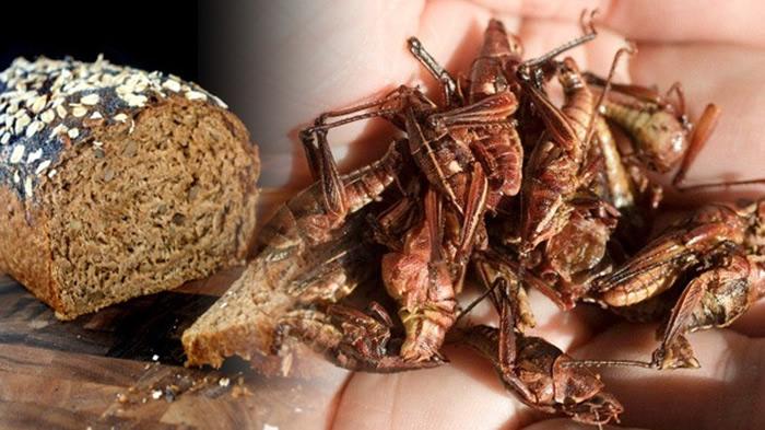 Comen pan con insectos