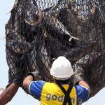 Exportaciones peruanas de pesca crecen 48% en primeros 9 meses del año