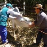 Más de cien pequeños productores de Andahuaylas beneficiados por el Senasa