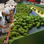 Perú registra récord de exportaciones agrícolas a la UE en primer semestre