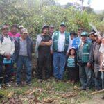 Senasa instruye a productores de Apurímac para mejorar cultivo de palto