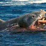Tiburón mata a turista estadounidense en Costa Rica