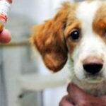 Minsa: Meta de Vancan 2017 es vacunar a más de 3 millones de canes