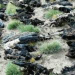 34 cóndores mueren envenenados en Argentina