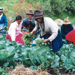 FAO: Mejorar situación de mujeres indígenas requiere eliminar discriminación