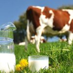 La leche de vaca no afecta al desarrollo de la diabetes tipo 1 en niños