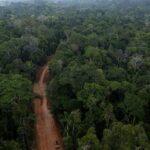 Buscan anular ley de fomento carreteras en áreas críticas de Amazonía peruana
