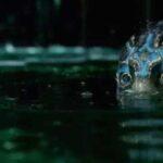 The Shape of Water encabeza nominaciones de los Bafta con 12 candidaturas (VIDEO)