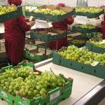 Agroexportaciones peruanas llegaron a 149 países del mundo