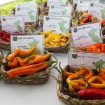"""Adex: Declarar el """"Día de los ajíes peruanos"""" promoverá producción sostenible"""