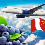 Exportaciones de arándanos peruanos a China fue de 4.000 toneladas
