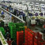Exportaciones peruanas generaron más de 3 millones de empleos en el 2017