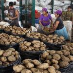 Continúa oferta de papa blanca a S/ 1 el kilo en feria de Agro Rural